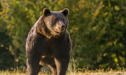 Стадион от Олимпиадата бе нападнат от... мечка