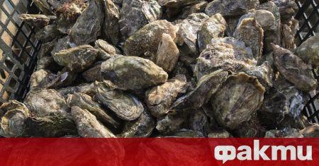 Френски учени установиха, че сладководните миди могат да улавят и