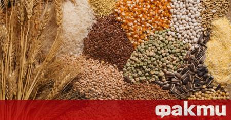 Зърнено-житните култури са група културни растения от семейство Житни и