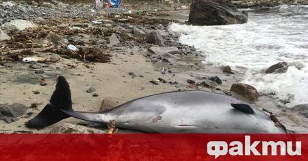 Не спират набезите на бракониерите рибари по Южното Черноморие, констатираха