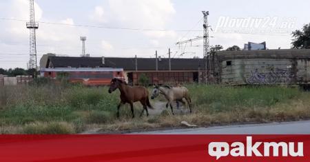 Читателката на plovdiv24.bg Вероника Христова е станала свидетелка на интересна