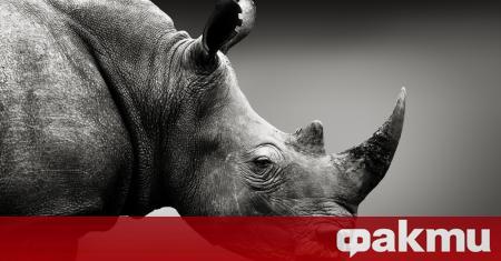 Над 500 вида сухоземни гръбначни животни са на ръба на