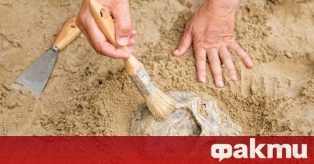 Вкаменелост на човешки череп, датираща отпреди 32 000 години, е