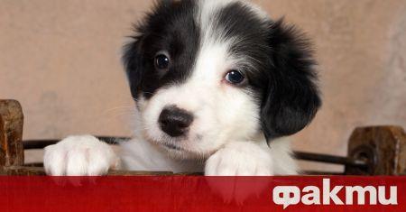 В САЩ се случи нещо учудващо: куче се роди с