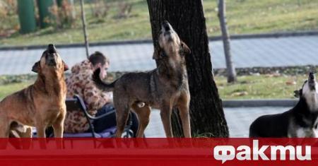 """Глутница бездомни кучета тормози блок 496 в столичния квартал """"Младост"""","""