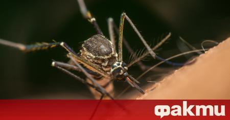 Вярвате или не, комарите имат своето ценно място в природата,