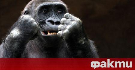 Маймуна алкохолик в Северна Индия получи доживотна присъда, съобщава