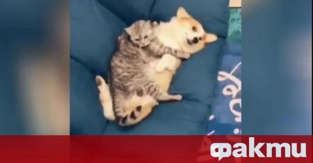 Котките и кучетата, които живеят в един и същ дом,
