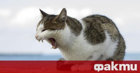 Домашните котки в Австралия убиват близо 300 милиона животни всяка