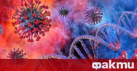 Две отделни изследвания на новия коронавирус SARS-CoV-2 показват, че преболедуването