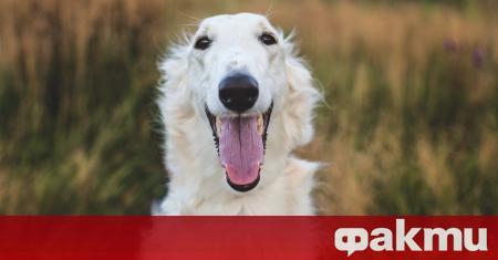 Куче се превърна в интернет сензация, но не заради смешни