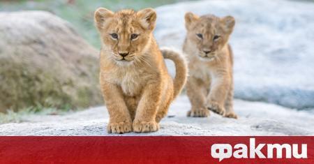 Зоопаркът в Рм се сдоби с две нови попълнения по