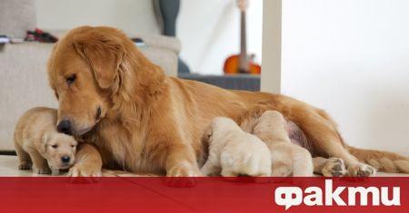 Търговците, които продават домашни любимци по интернет, най-често кучета и