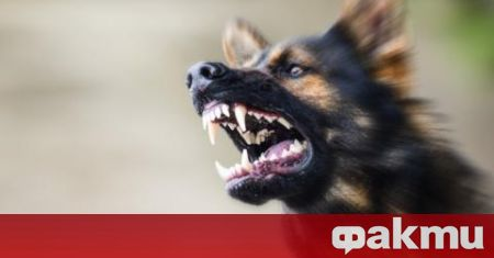 Бездомни кучета проникнаха в имота на мъж и разкъсаха кокошките
