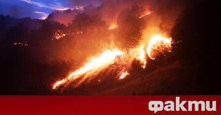Пожар е избухнал край Петрич снощи. Огънят е пламнал близо