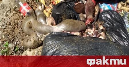 Трупове на заклани животни, мръсотия и неописуема смрад тровят жителите
