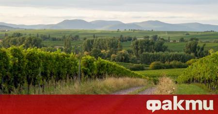 Райнхесен Райнхесен е най-големият лозаро-винарски регион в Германия. Лозарските масиви