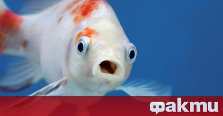 Депресиран и самотен рибок, изял всеки един свой приятел, споделял