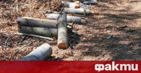 Незаконната сеч носи около 150 млн. лева годишно на бракониерите