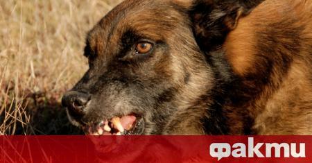 Агресивни кучета нахапаха брутално мъж от село Логодаж край Благоевград.