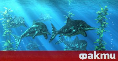 Древен ихтиозавър, открит на брега на остров Руски във Владивосток,