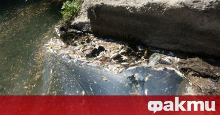 Регионалната инспекция по околната среда и водите в Плевен, Изпълнителната