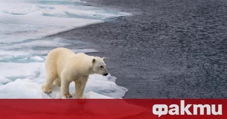 В следващите 30-40 години ледената покрива над Арктика е застрашена