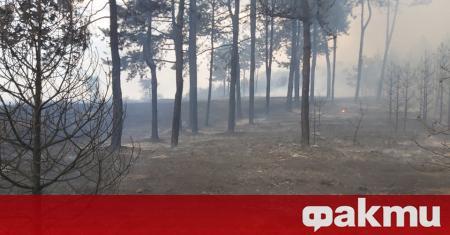 Пожарите на територията на област Хасково са потушени, а огнената