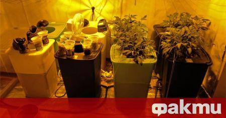 Разкриха високотехнологична лаборатория с канабис в Добрич, съобщиха от полицията.