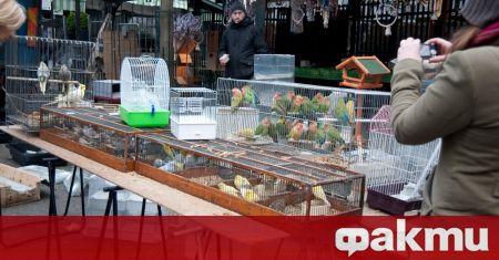 Птичият пазар, който се организира всяка неделя от 19-и век