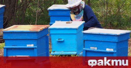 Няма държавна мярка, която да компенсира загубите при пчеларите. Над