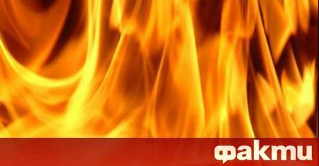 """Пожар пламна в парк """"Росенец"""" край Бургас в късния следобед"""