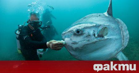 Рекордно голяма риба е открита край испанския автономен град Сеута,