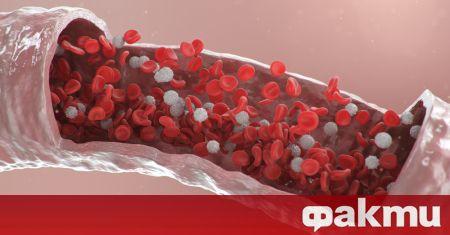 Кръвта е основата за функционирането на всички системи и органи