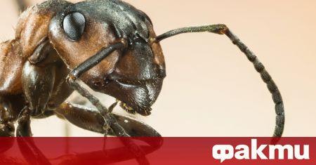 Ако мравките са избрали дома ви да бъде част от