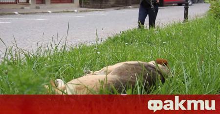 """През месец юли 101 кучета от приютите на """"Екоравновесие"""" са"""