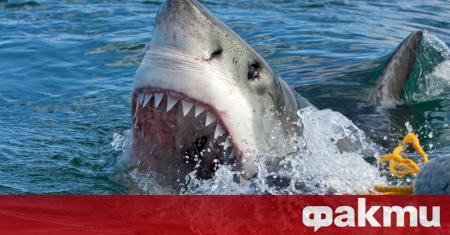 Младият френски сърфист Дилан Накас оцеля при атака от акула