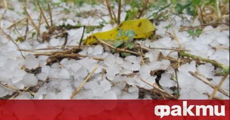 Градушка с размер на грахови зърна удари Добрич, съобщава bTV.