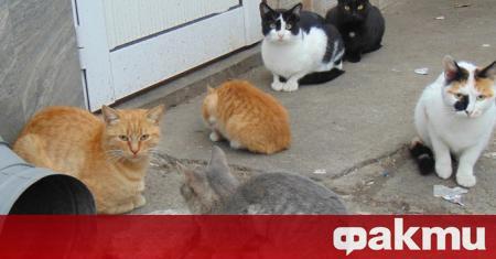 Възрастното семейство, което беше задържано вчера за убийство на котка,