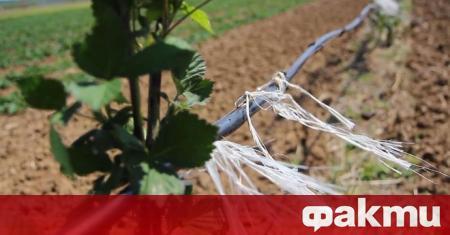 Близо 35 хиляди фермери са кандидатствали по извънредните мерки за
