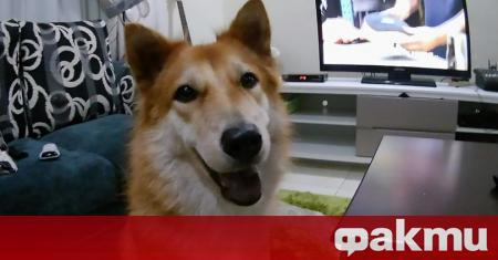Смело домашно куче пожертва живота си, влизайки в неравна битка
