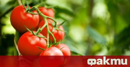 Организациите на производители на плодове и зеленчуци подават заявления за