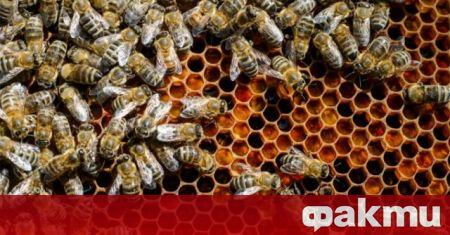 Всички пчелари и фермери, обработващи площи със земеделски култури, трябва