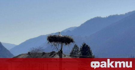 В симитлийското село Полето кацна първият щъркел за тази година,
