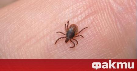 Няма данни кърлежи и комари да разпространяват коронавируса. Вирусът е