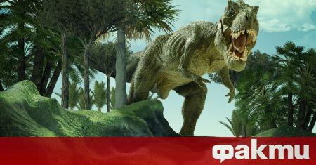 Тиранозавър рекс е бил страховит ловец, но е ходел доста