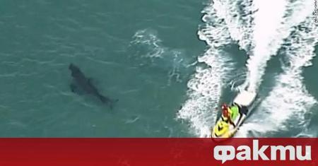 36-годишен австралиец стана жертва на агресивна акула, съобщава 7News. В