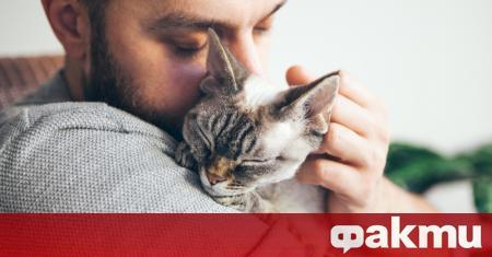 Повечето котки предпочитат да раждат сами и без излишни присъстващи