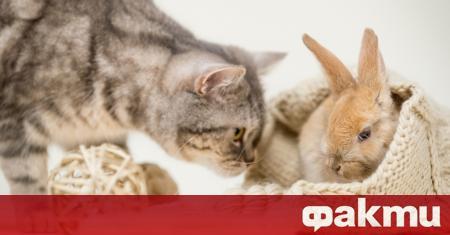 Котката на име Пандора е живяла от малка с две