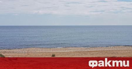 Мъртви делфини са открити на плаж Алепу, съобщава bTV. Телата